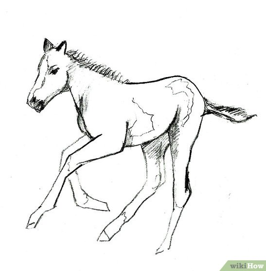 547x559 How To Draw A Foal 9 Steps (With Pictures)