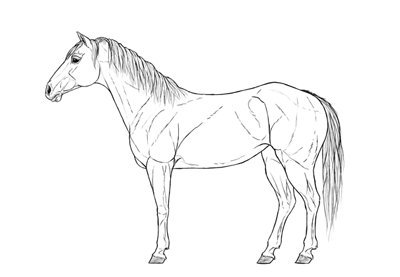 400x277 How To Draw A Horse Step By Step
