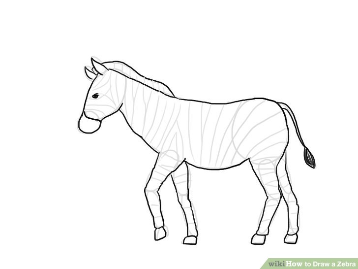 728x546 How To Draw A Zebra (With Pictures)