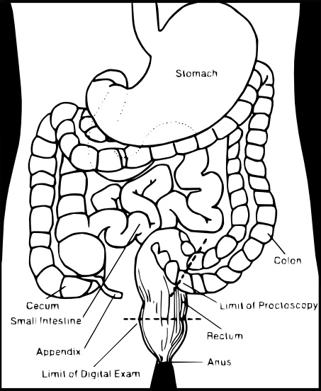 453x552 Vector Stomach Intestine Free Vector Download (16 Free Vector)