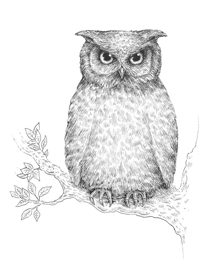 Cute Realistic Owl Drawing