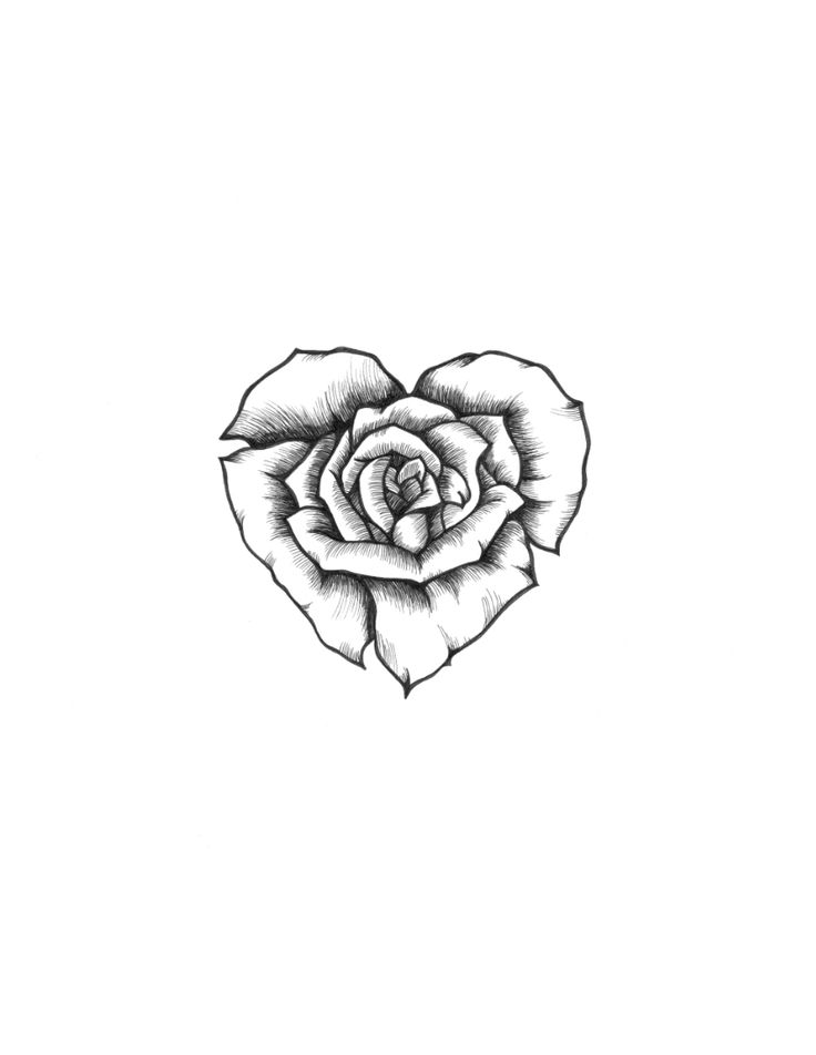 Small Rose Drawing