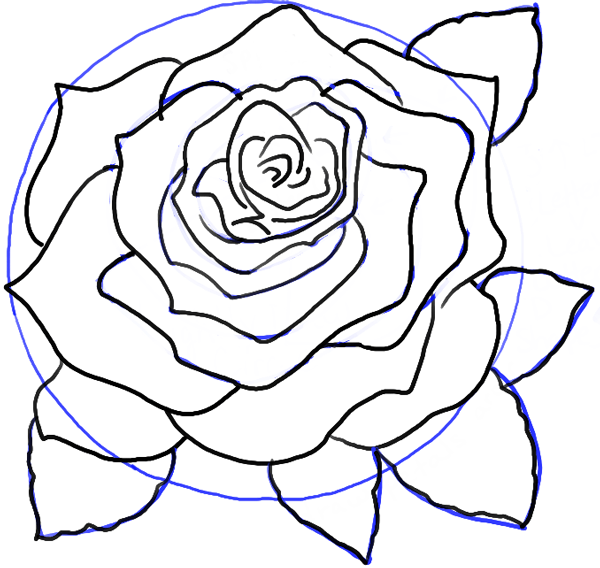 600x568 How To Draw Roses Opening In Full Bloom Step By Step Drawing