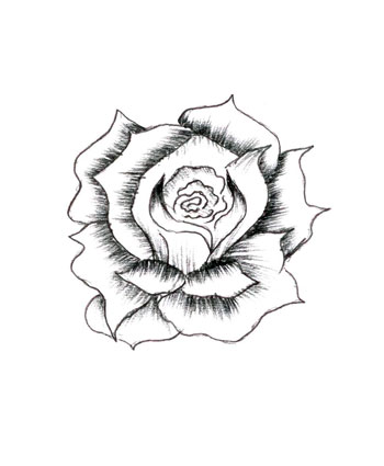 350x425 How To Draw Roses Step By Step Rose Drawings, Drawings And Rose