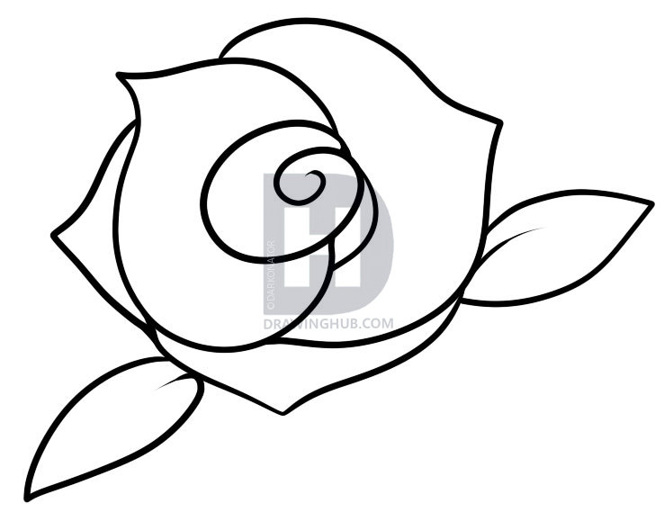 738x579 Photos How To Draw A Small Rose,