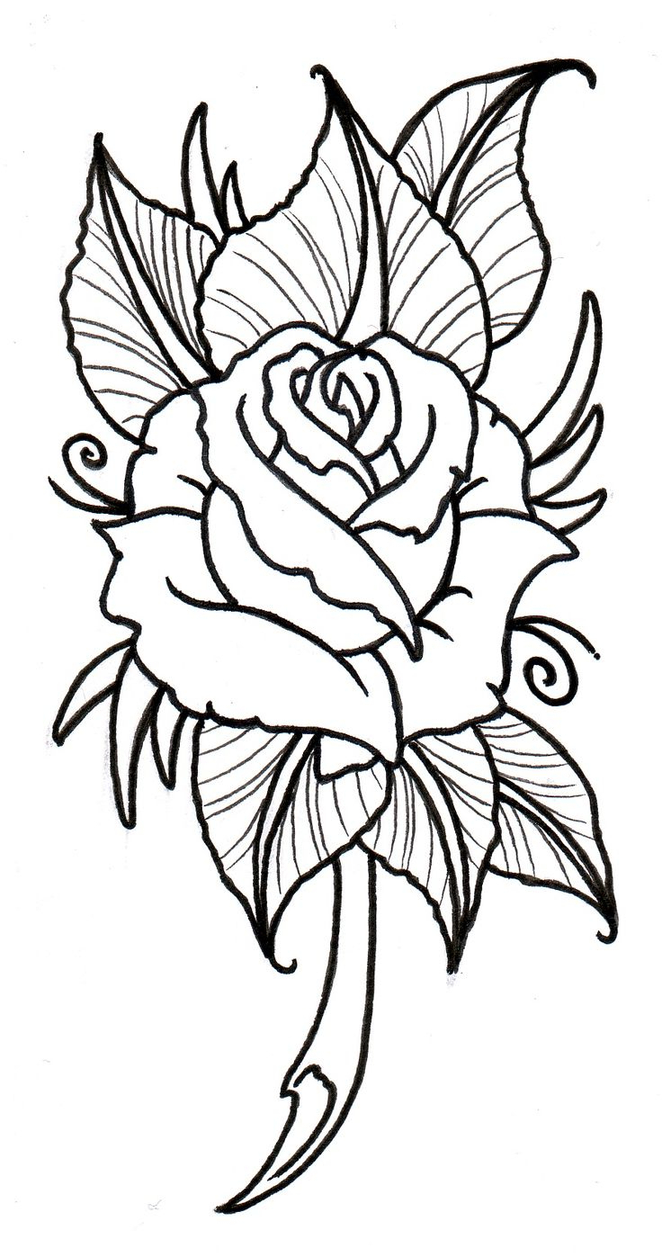 736x1397 Rose Flower Black And White Drawing Best Rose Outline Ideas