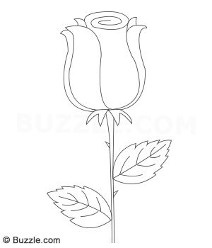 300x350 A Beginners Step By Step Guide To Draw Daisy And Rose Flowers