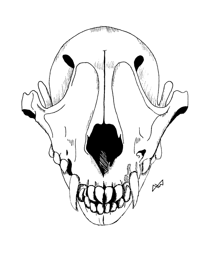 772x901 Wolf Skull By Amber6277