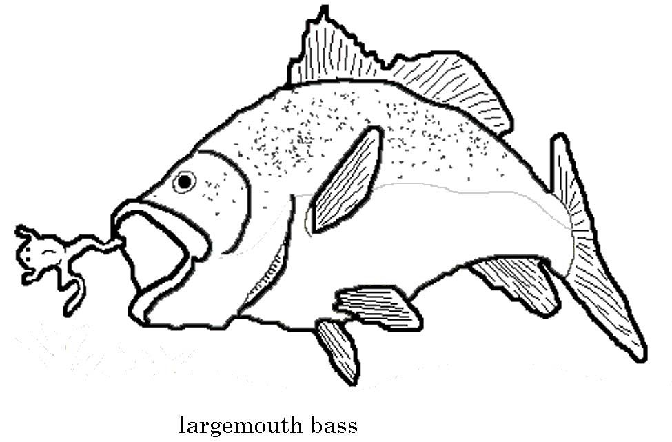 975x641 Smallmouth Bass Coloring Page Bass Fishing Coloring Page Person