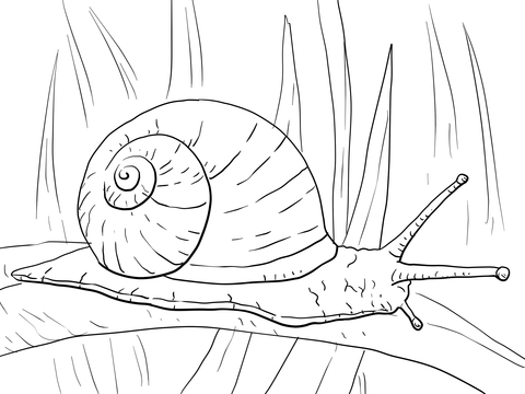 480x360 Garden Snail Coloring Page Free Printable Coloring Pages