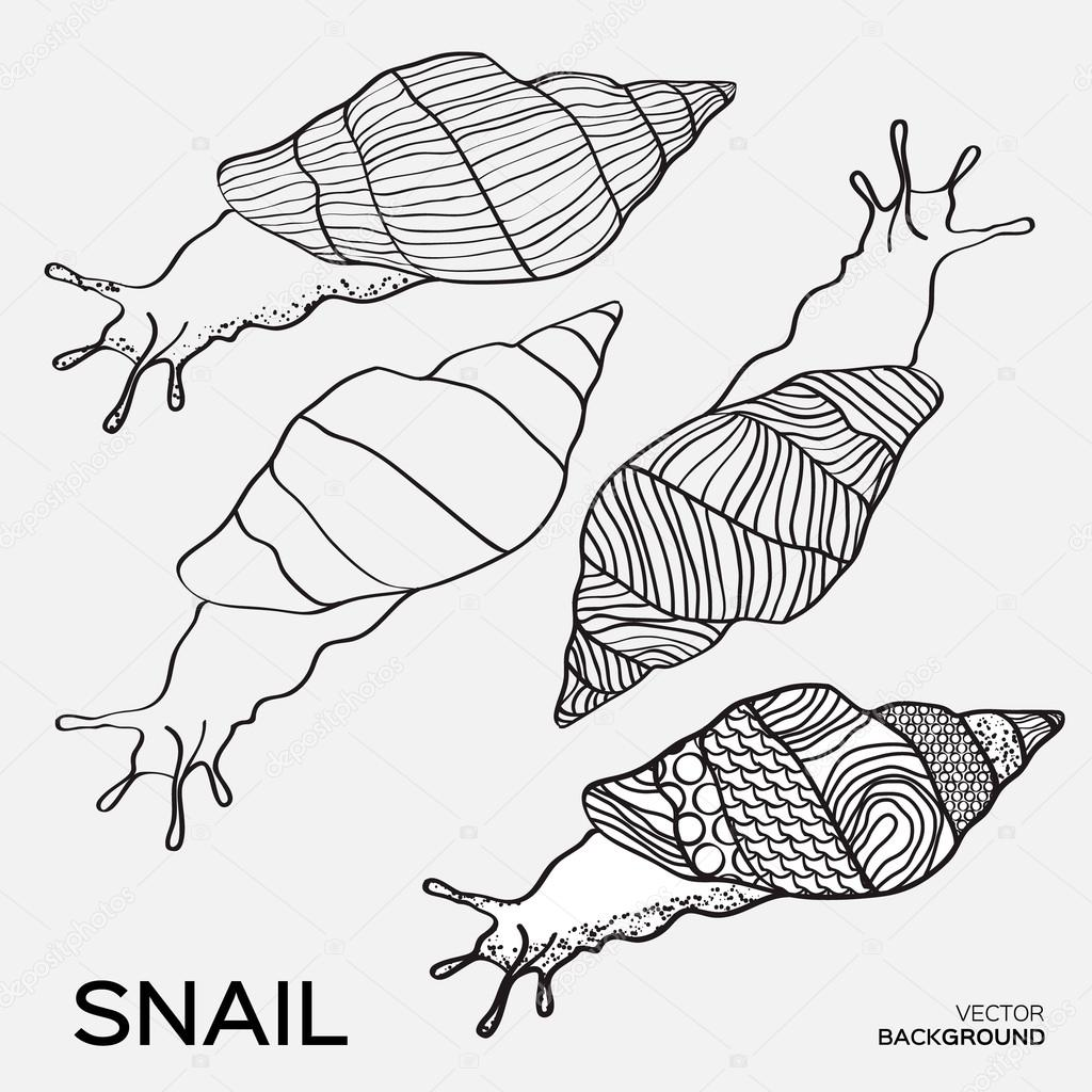 1024x1024 Monochrome Silhouettes Of Snail Drawing Outline Stock Vector