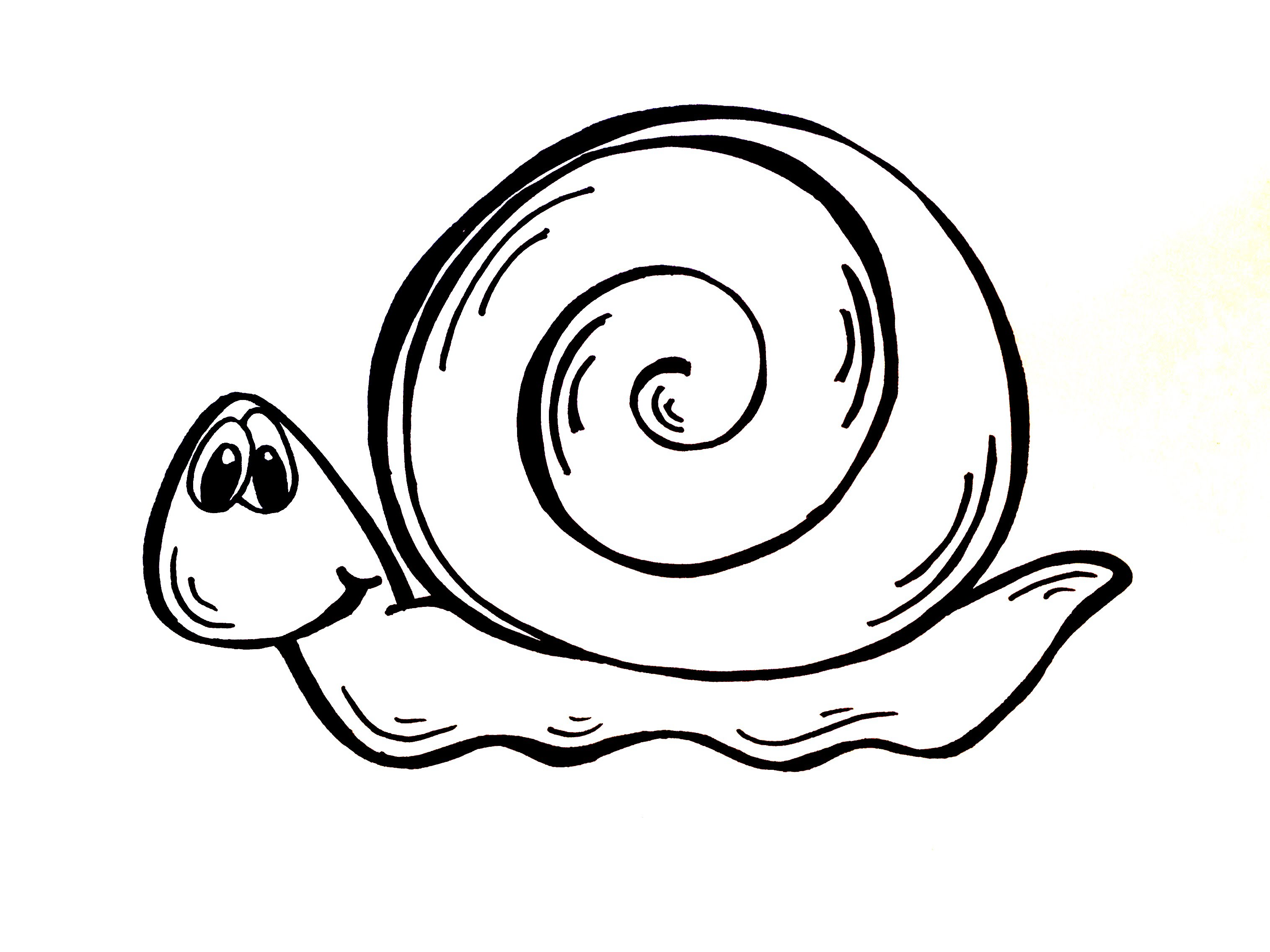 3031x2273 Drawing Lesson How To Draw A Snail
