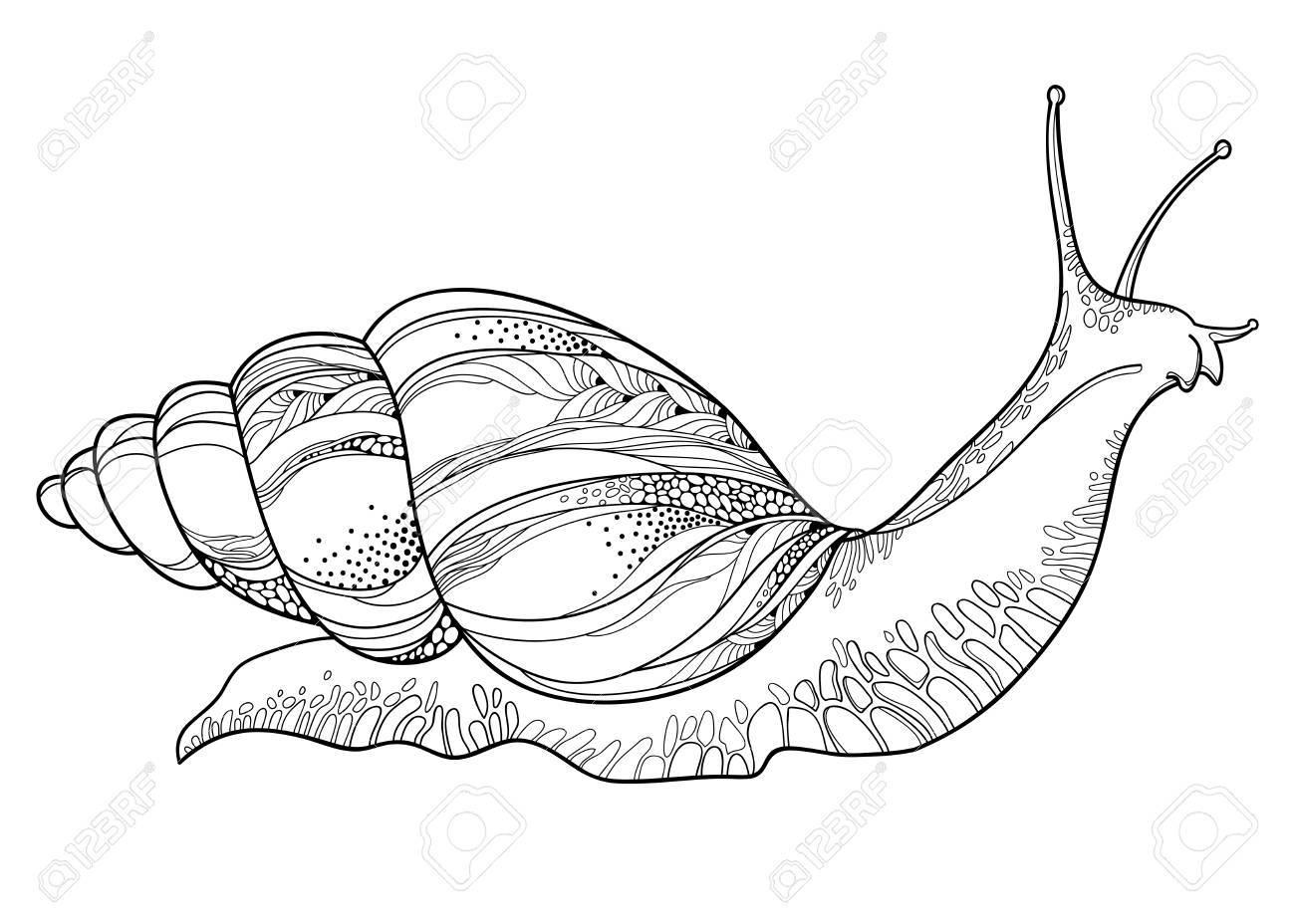 1300x928 Drawing Of Achatina Snail. Royalty Free Cliparts, Vectors,