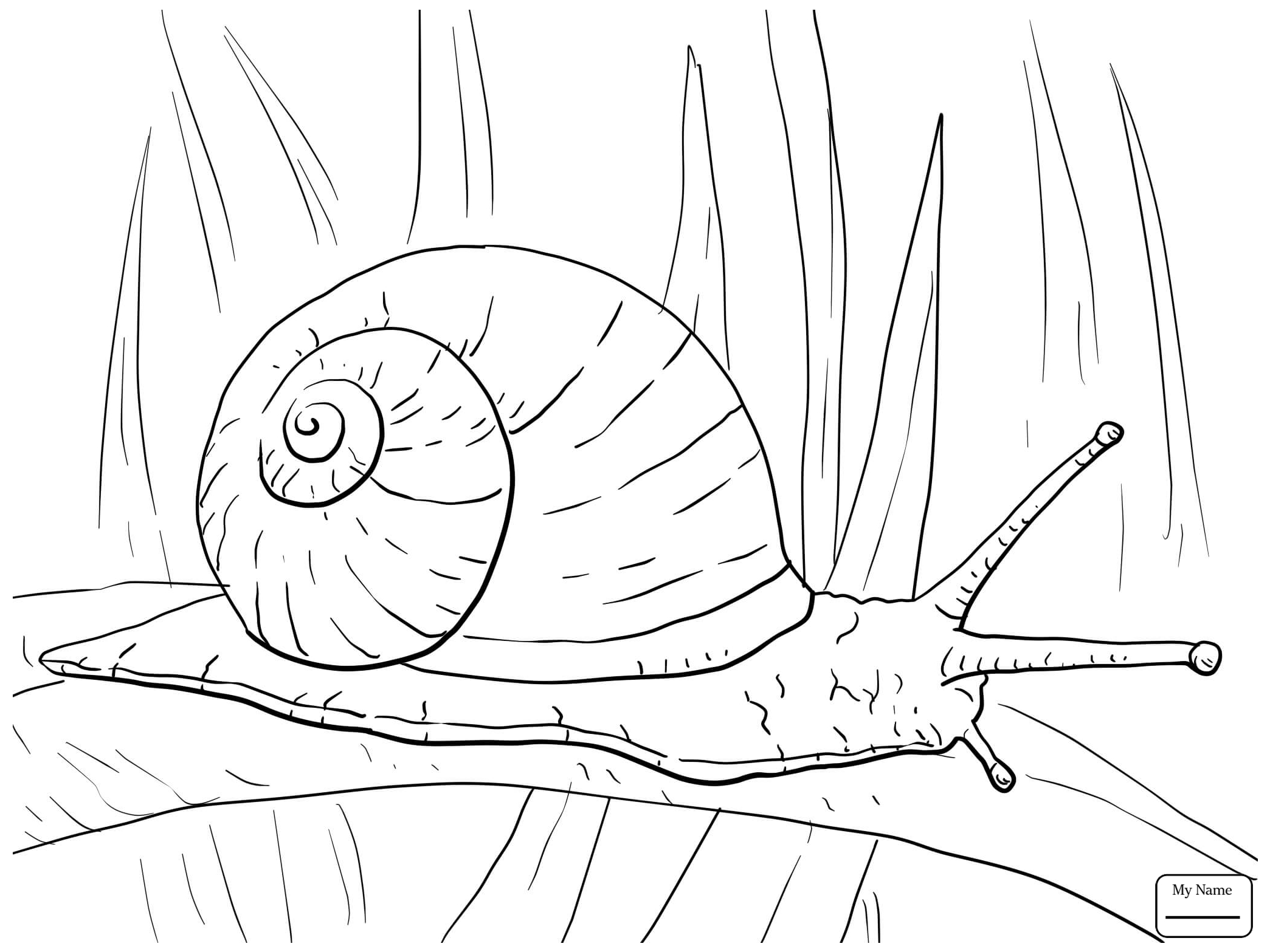 Snail Line Drawing at GetDrawings.com | Free for personal use Snail ...