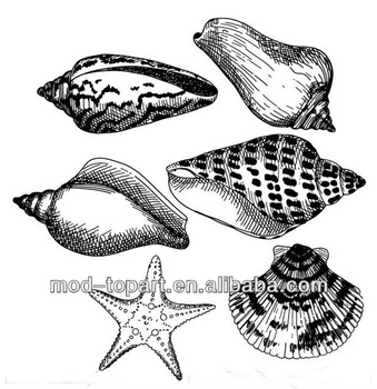 339x350 Sea Snail Shell Paintingsea Shells For Painting