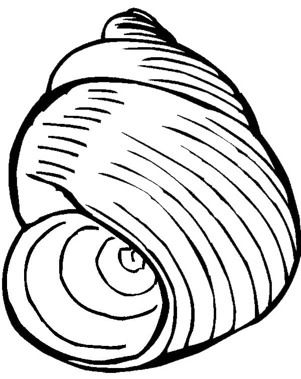 600x756 An Exquisite Moon Snail Seashell Coloring Page