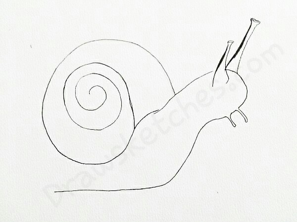 600x450 How To Draw A Snail In A Few Easy Steps With Pictures