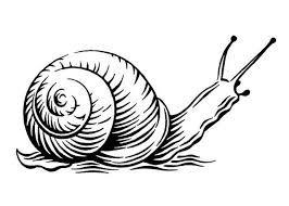 266x190 Risultati Immagini Per Picture Of Snail For Children To Colour