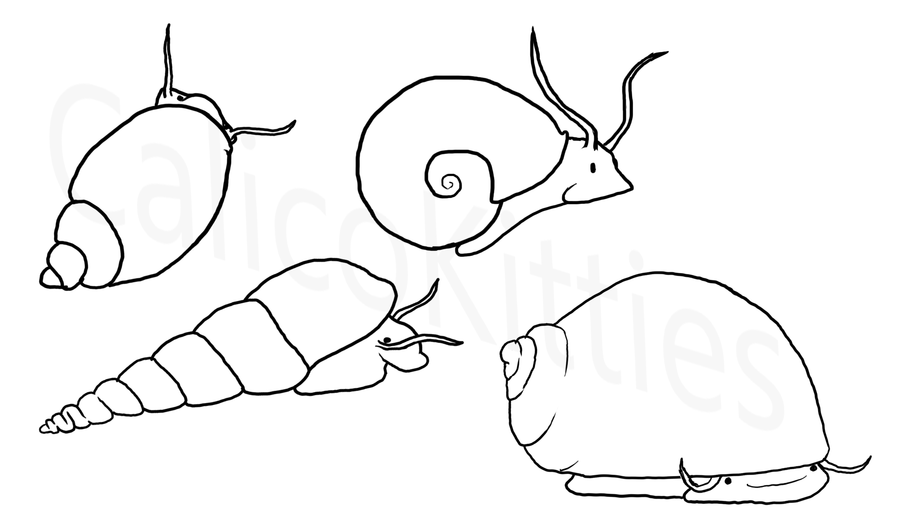 900x529 Snails The Good, The Bad, And The Adorable My Aquarium Club