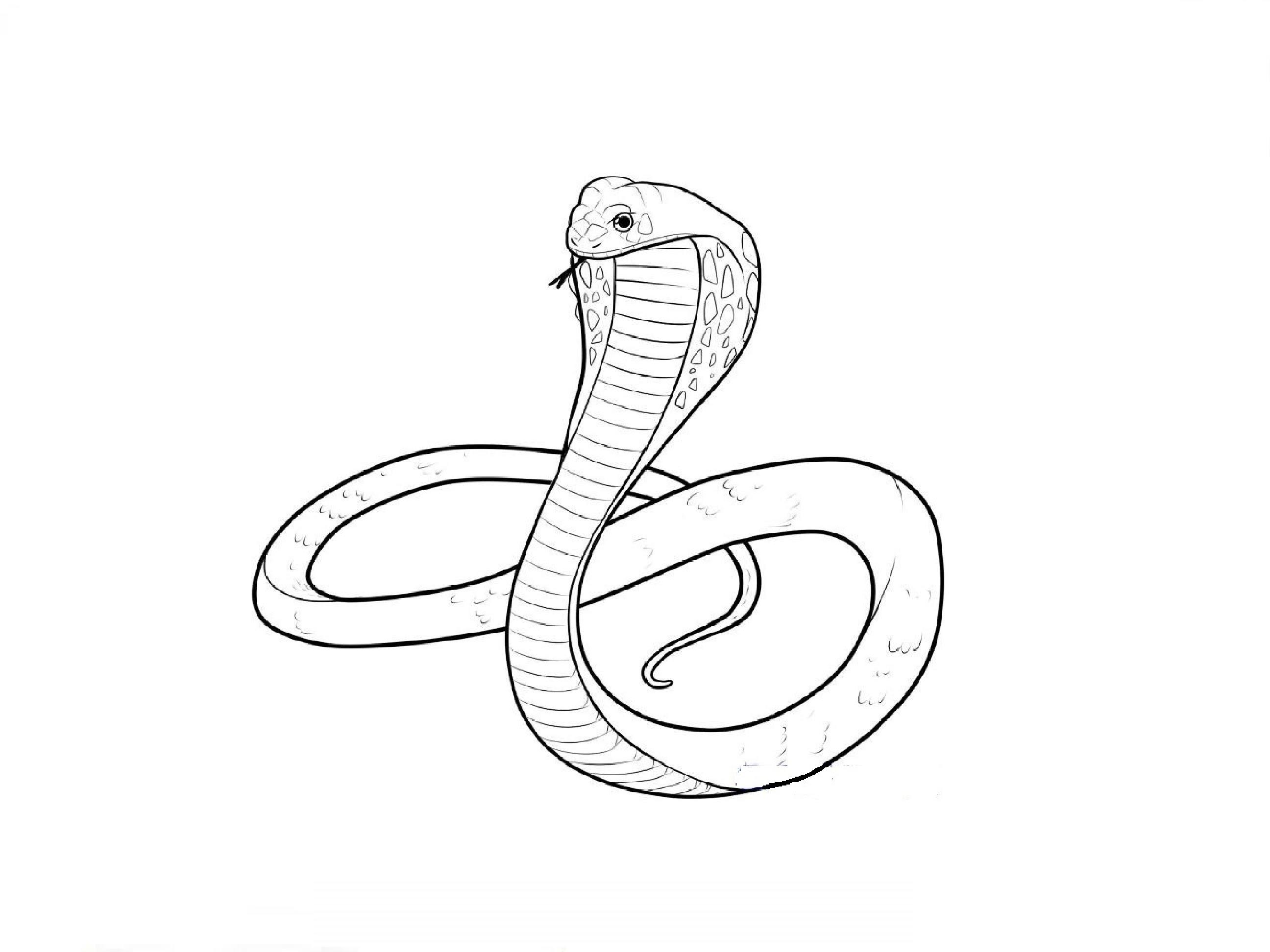 2592x1944 How To Draw A Cobra