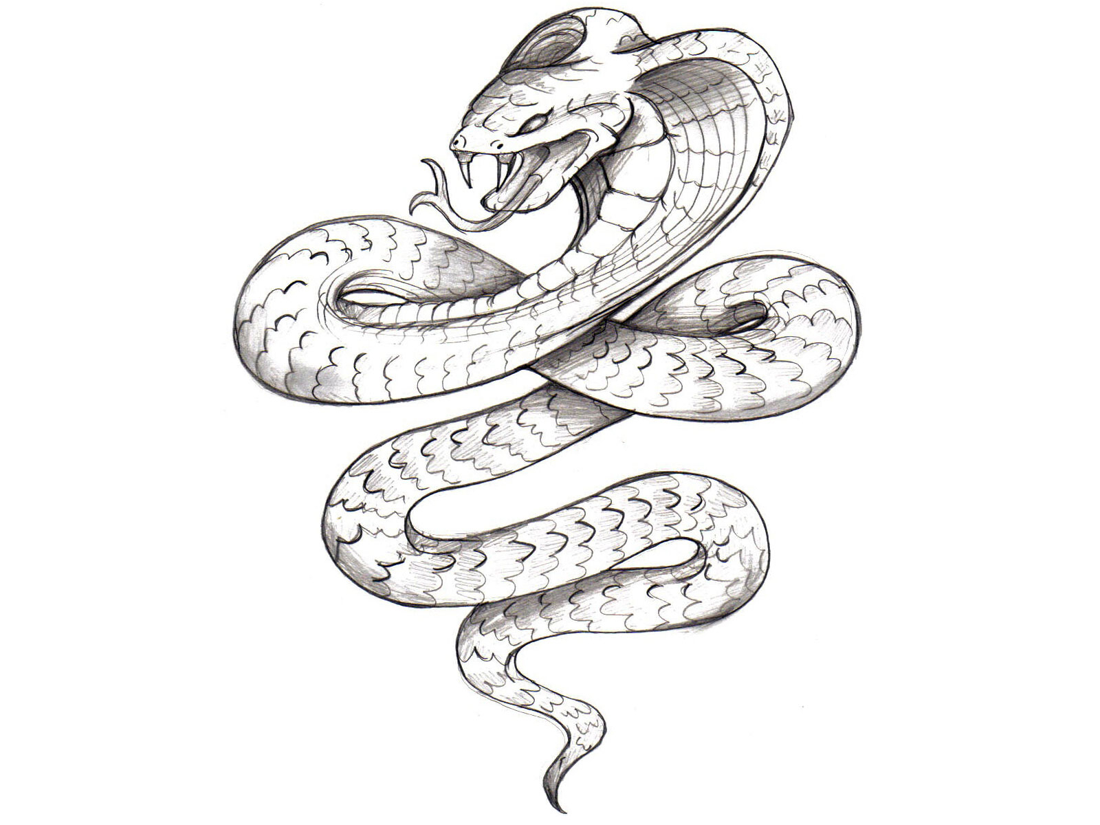 1600x1200 Pencil Sketches Of Snakes 3d Pencil Drawing Snake