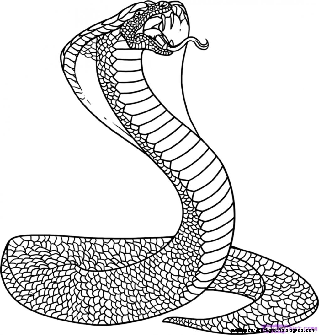 1017x1067 Cobra Snake Drawings Wallpapers Background