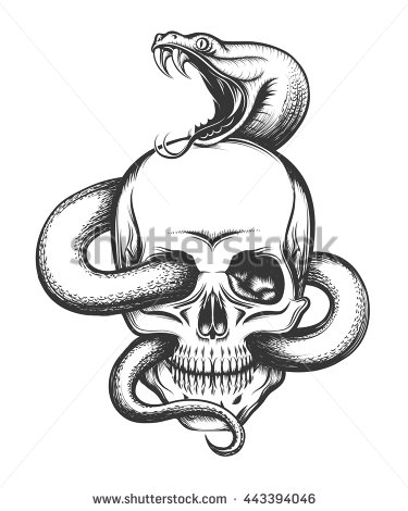 375x470 Human skull with crawling snake. Illustration in engraving style