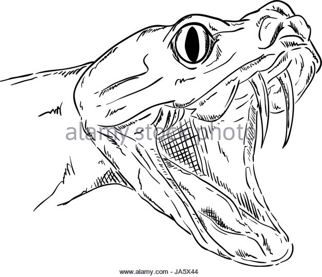 627x540 Snake Cartoon Contour Stock Photos Amp Snake Cartoon Contour Stock
