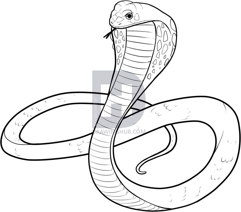 787x695 How To Draw A King Cobra, Step By Step, Drawing Guide, By