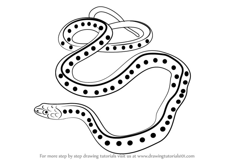 800x563 Learn How To Draw A Common Garter Snake (Reptiles) Step By Step