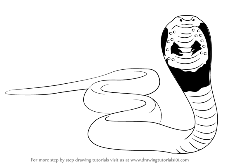 800x566 Learn How to Draw a Snake (Snakes) Step by Step Drawing Tutorials