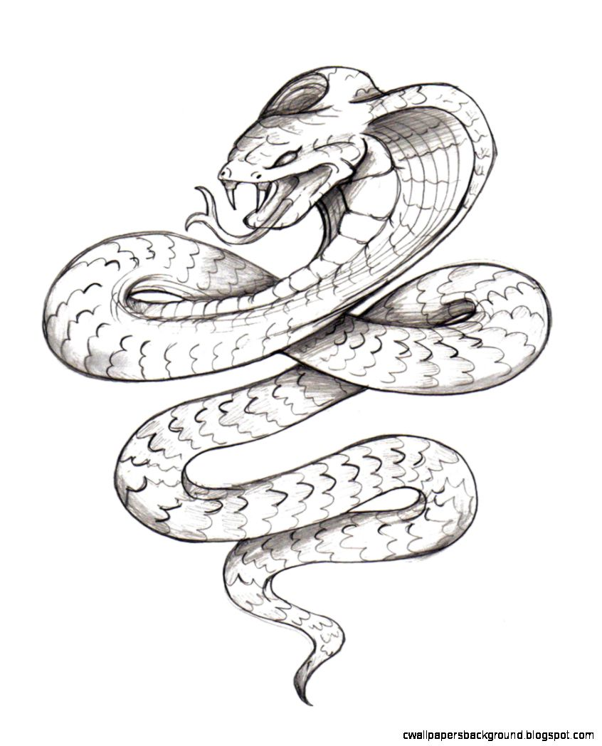 846x1048 Realistic Snake Drawing Wallpapers Background