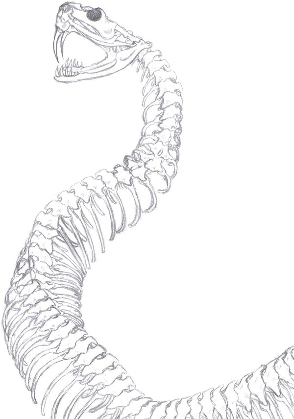 600x855 Snake Skeleton by Aureawolf on DeviantArt