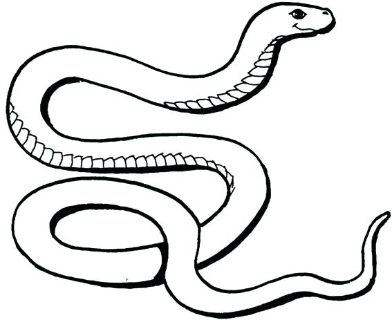 567x463 This Is Snake Coloring Pages Images Below Are Some Free Printable