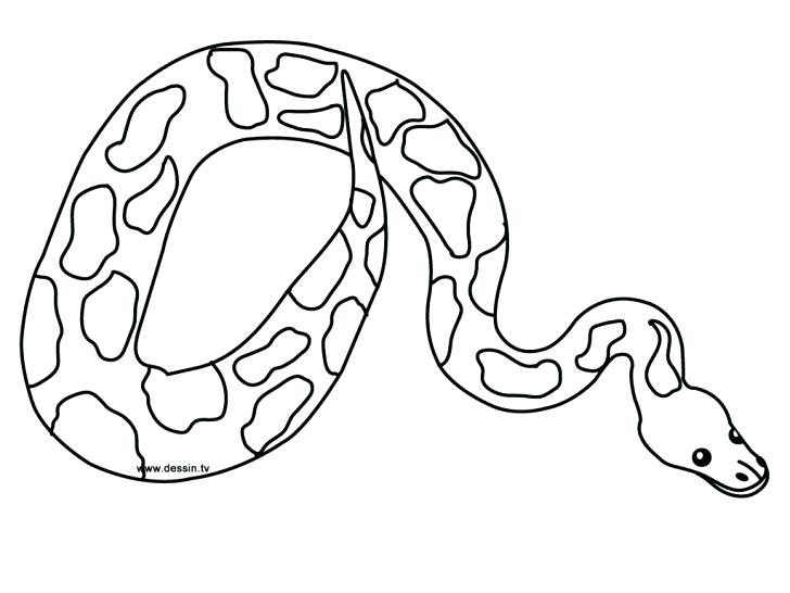 728x546 Coloring Page Snake Snakes Coloring Pages Printable Snake For Kids