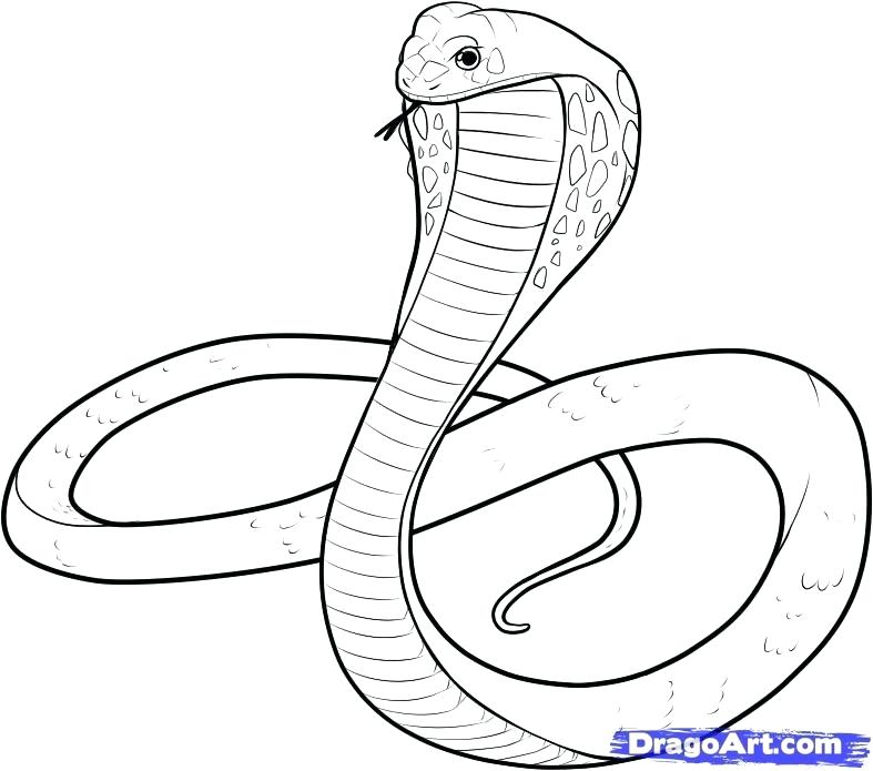 787x695 Coloring Pages Of Snakes Snake Drawings For Kids King Cobra