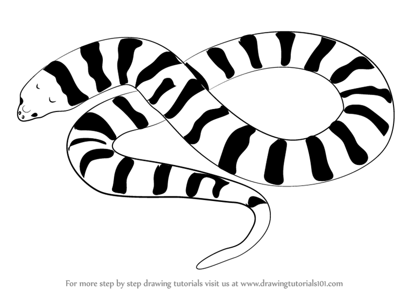 800x566 Learn How to Draw a Tiger Snake (Snakes) Step by Step Drawing