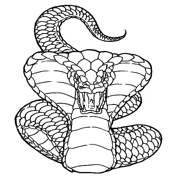 600x600 Coloring Pages Snake