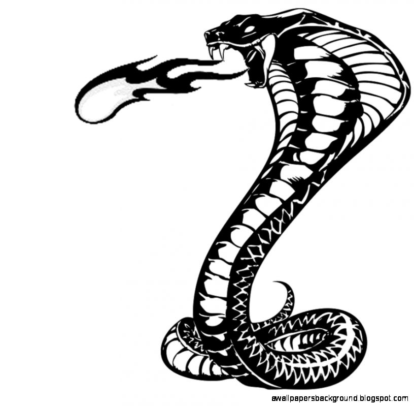 816x799 Cobra Snake Drawings Wallpapers Background
