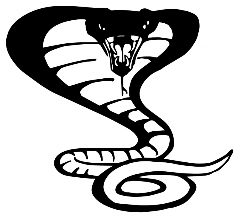 800x729 Drawn snake cobra snake