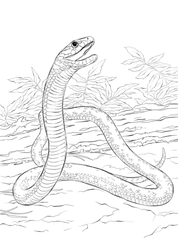 360x480 Black Mamba Coloring Page Free Printable Pages