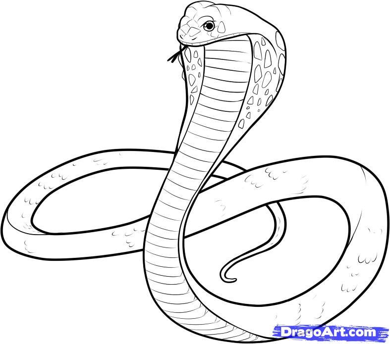 787x695 How To Draw A Cartoon King Cobra Snake