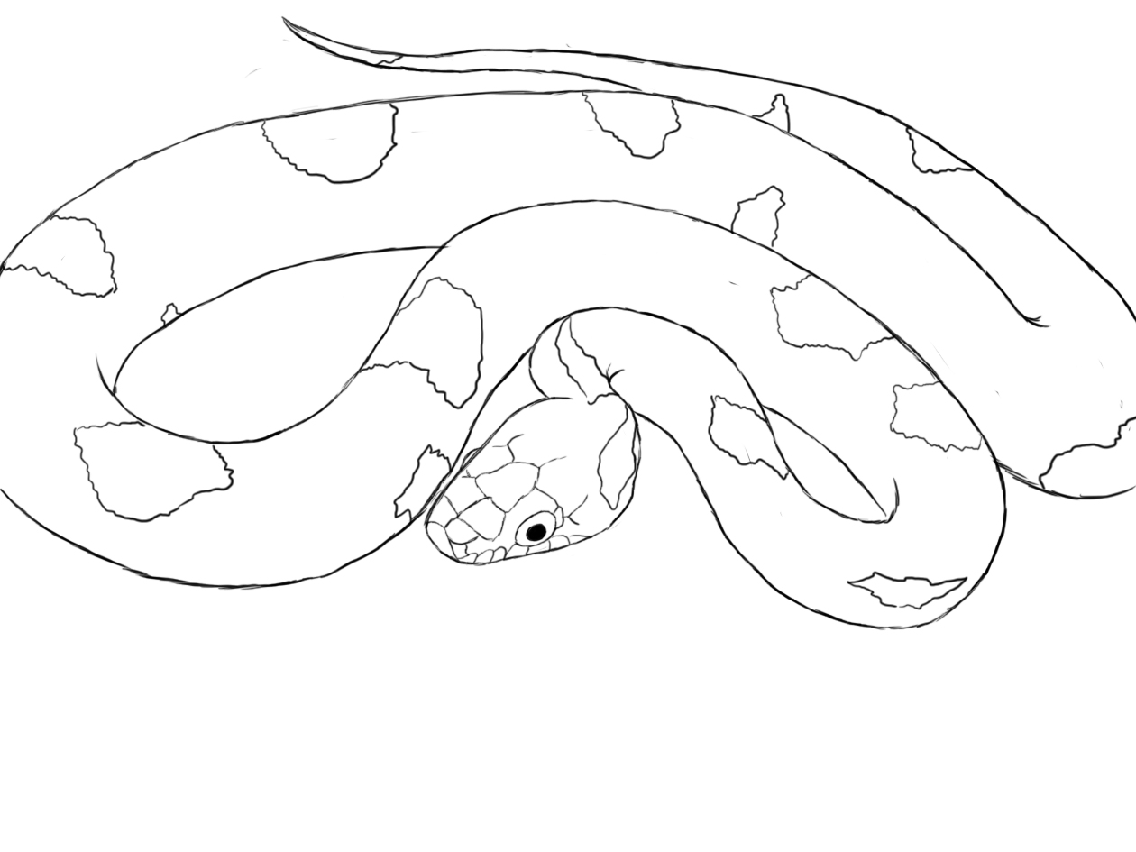 1260x945 How To Draw A Snake Snake Drawing, Snake And Animal Drawings