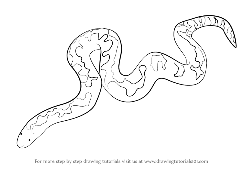 800x565 Learn How to Draw a Kenyan Sand Boa (Snakes) Step by Step