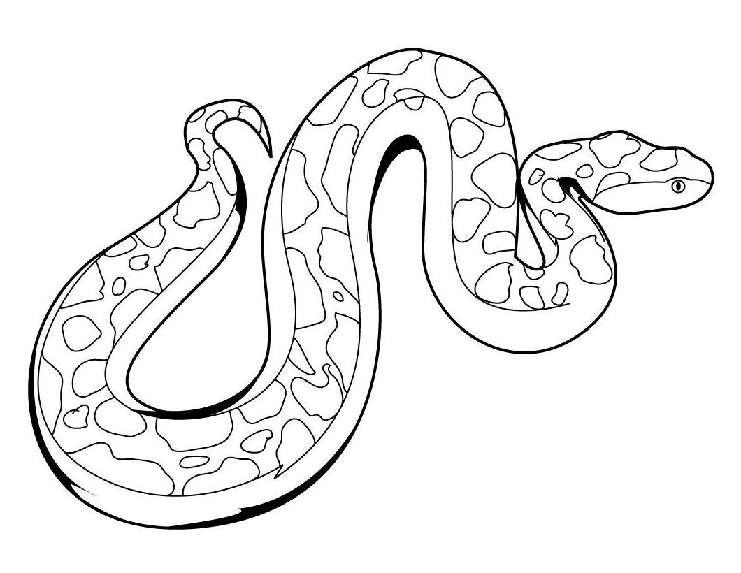 1060x820 Rainforest Animals Snake Easy To Draw Rainforest Snake Coloring