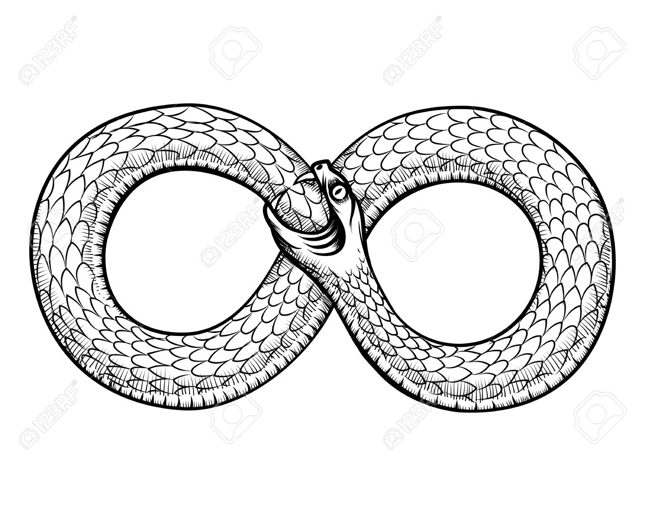 1300x1040 Snake Curled In Infinity Ring. Ouroboros Devouring Its Own Tail