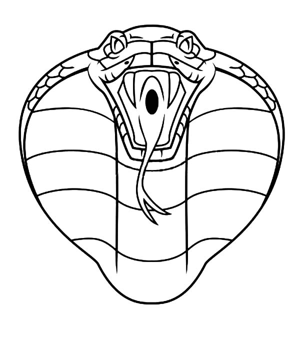 Shelby King Cobra >> Snake Face Drawing at GetDrawings.com | Free for personal use Snake Face Drawing of your choice