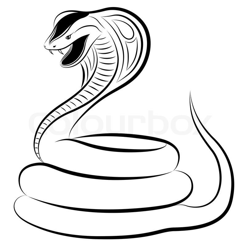 800x800 Snake, Cobra Stock Vector Colourbox