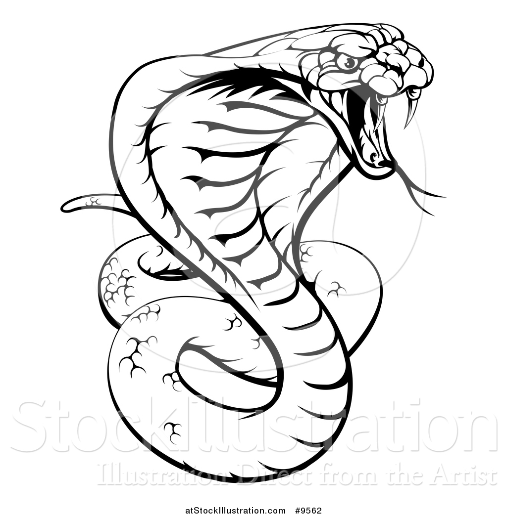 Snake Tattoo Line Drawing : Snake outline drawing at getdrawings free for
