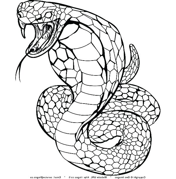600x612 King Cobra Clipart Coloring Page Pencil And In Color King Cobra